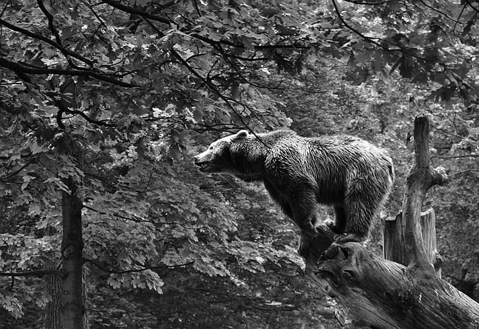 Fabian Fröhlich, Berlin, Zoo, Braunbär