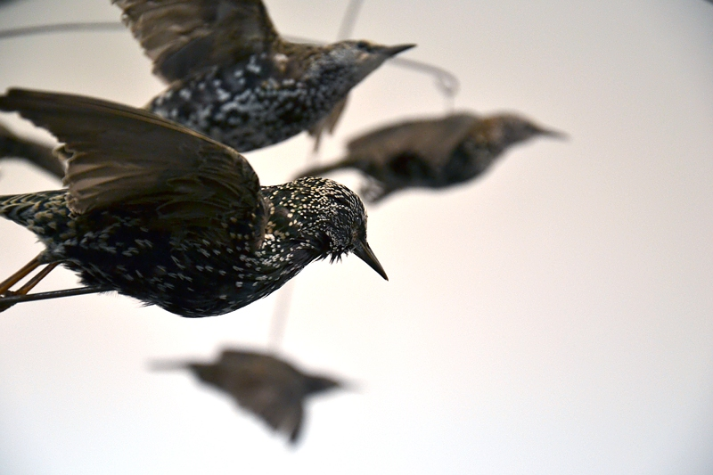 London, Frieze Art Fair, Henrik Hakanson, The Y Swarm (Sturnus vulgaris), Fabian Fröhlich