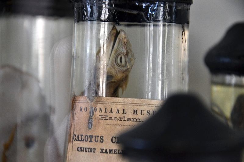 Natuurhistorisch Museum Maastricht, Nasspräparate