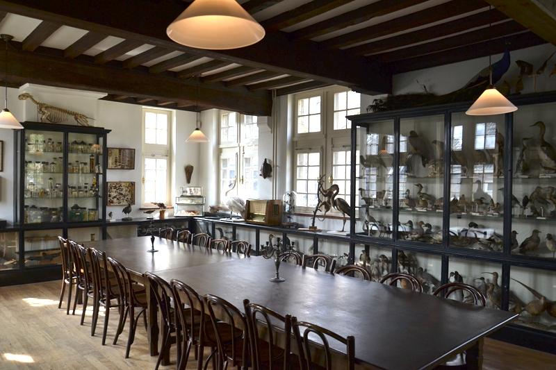 Natuurhistorisch Museum Maastricht, Historische Präsentation