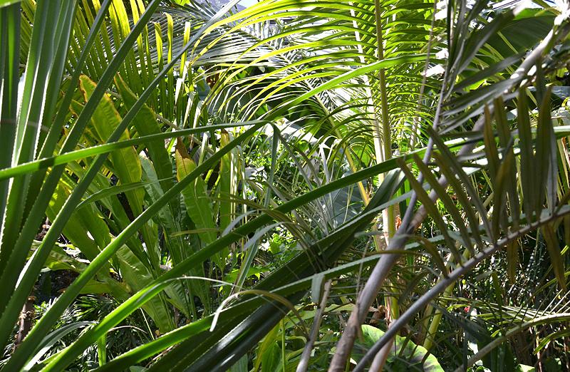Planten un Blomen, Gewächshaus, Alter Botanischer Garten, Hamburg