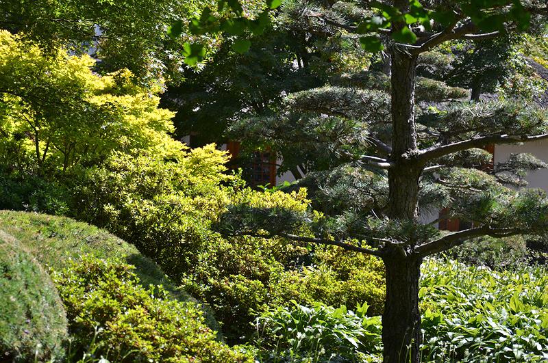 Planten un Blomen, Japanischer Garten, Hamburg