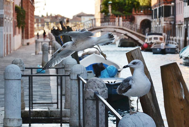 Venezia, Fondamento Fornace, Möwen