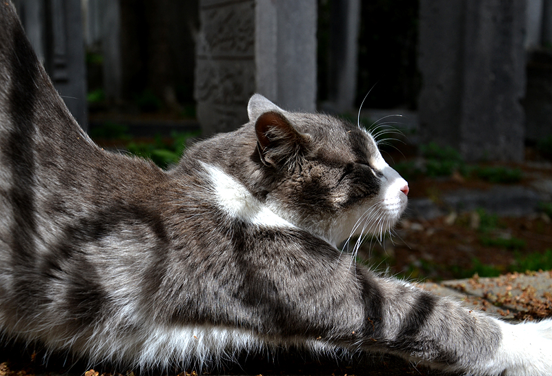 Istanbul, Katze