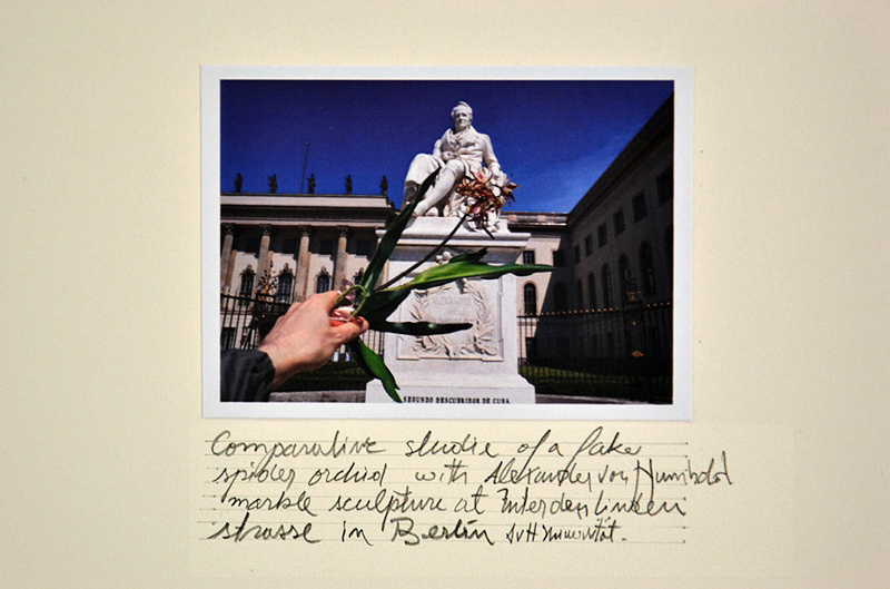 8. Berlin Biennale, Museen Dahlem, Alberto Baraya, Comparative Studies, Herbarium of Artificial Plants