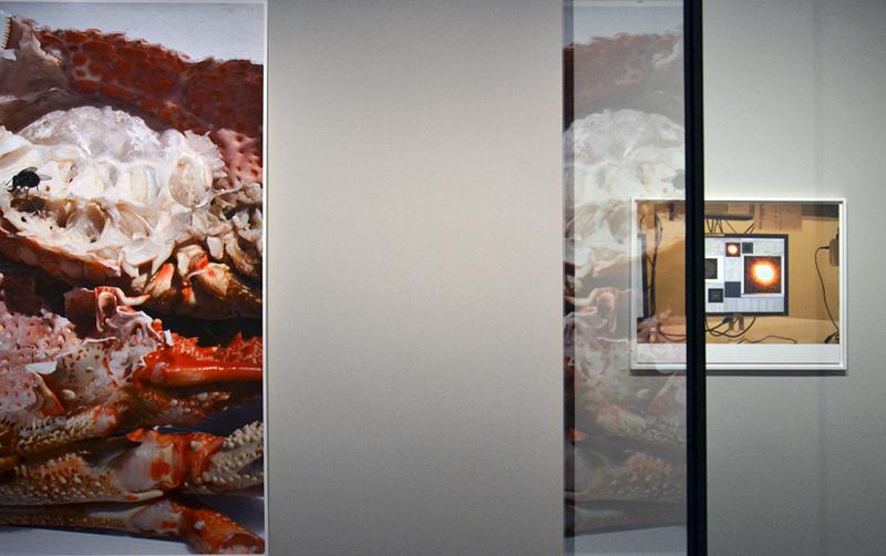 8. Berlin Biennale, Museen Dahlem, Wolfgang Tillmans, Eastern Woodlands Room