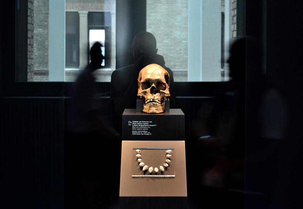 Homo aurignacensis Hauseri, Neues Museum, Museum für Vor- und Frühgeschichte