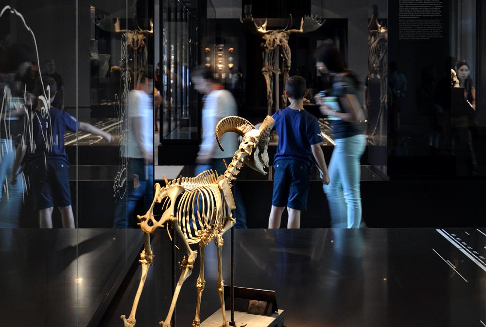 Neues Museum, Museum für Vor- und Frühgeschichte, Abteilung Steinzeit