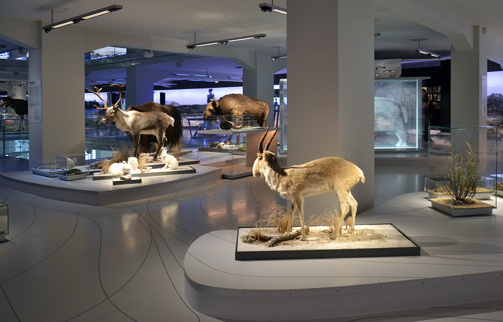 Archäogisches Museum Chemnitz, Ebene 1, Kalt- und Warmzeiten