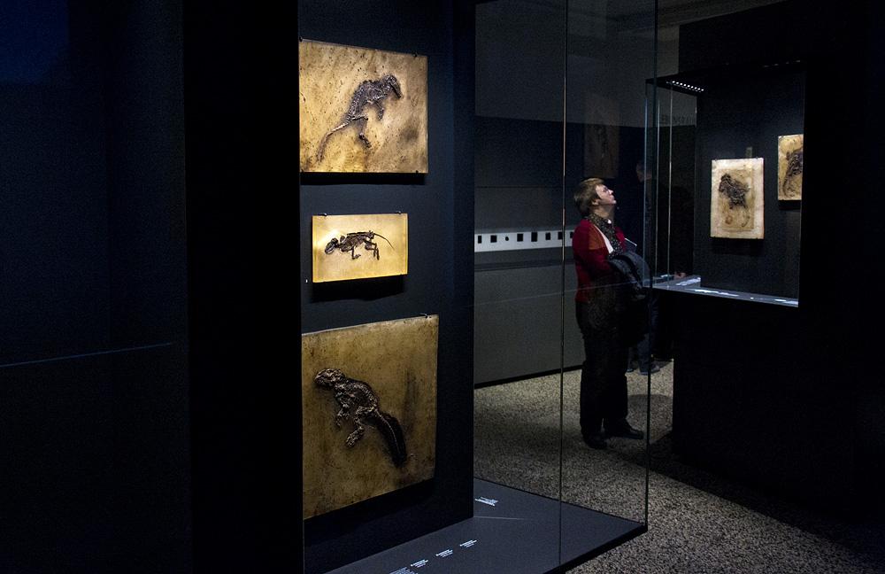 Hessisches Landesmuseum Darmstadt, Fossilien aus der Grube Messel