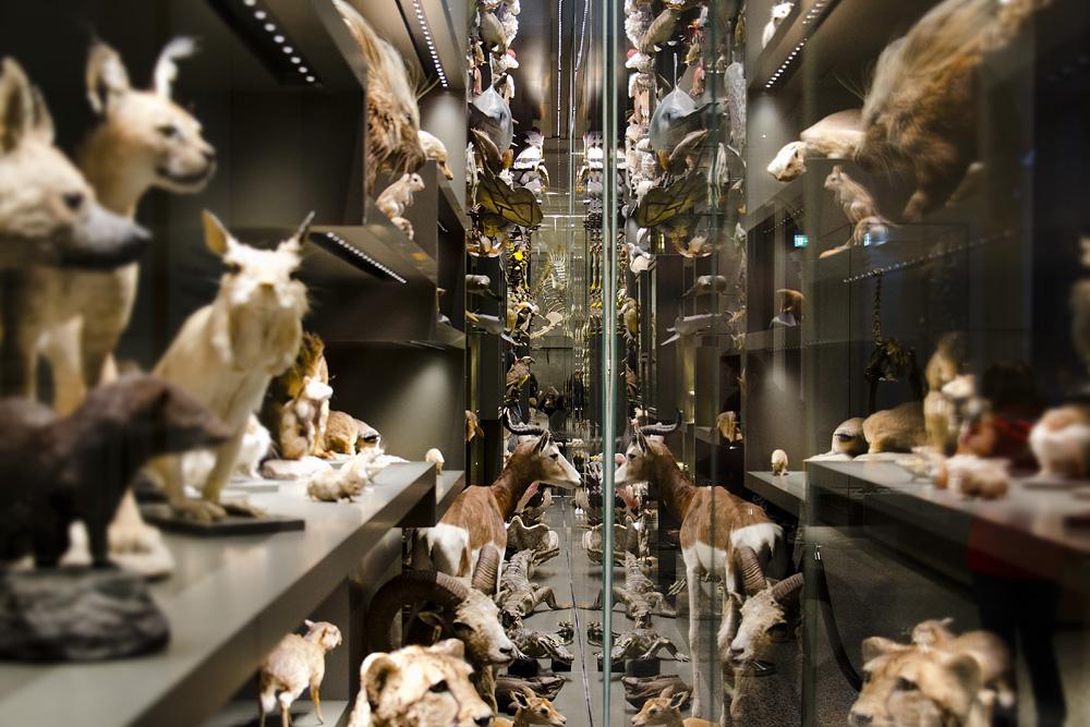 Hessisches Landesmuseum Darmstadt, Vitrine zur Biodiversität, Zoologie