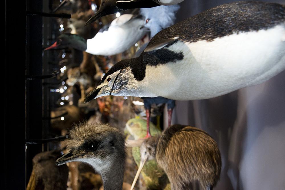 Museum für Naturkunde Berlin, Artenvielfalt