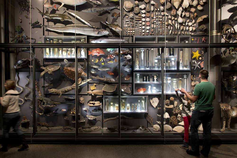Museum für Naturkunde Berlin, Biodiversität