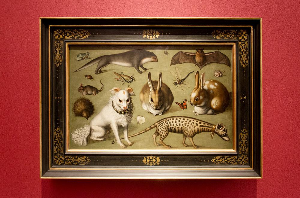 Münster, LWL-Landesmuseum für Kunst und Kultur, Ludger tom Ring d.J., Tierbild mit Ginsterkatze