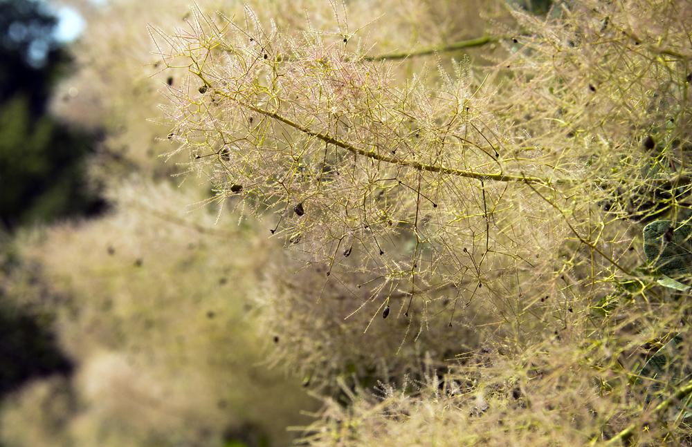 Britzer Garten, Staudengarten