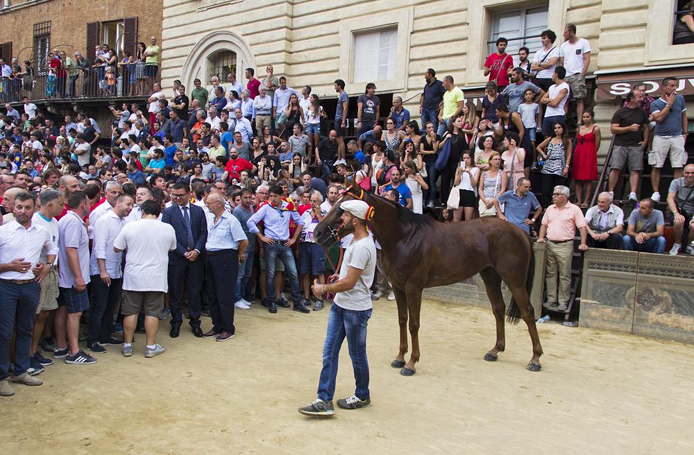 Siena, Palio, Präsentation des Siegerpferdes der zweiten Probe