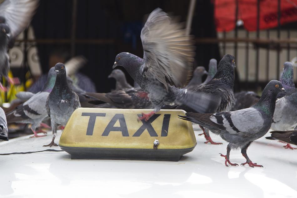 Yangon, Tauben, Taxi
