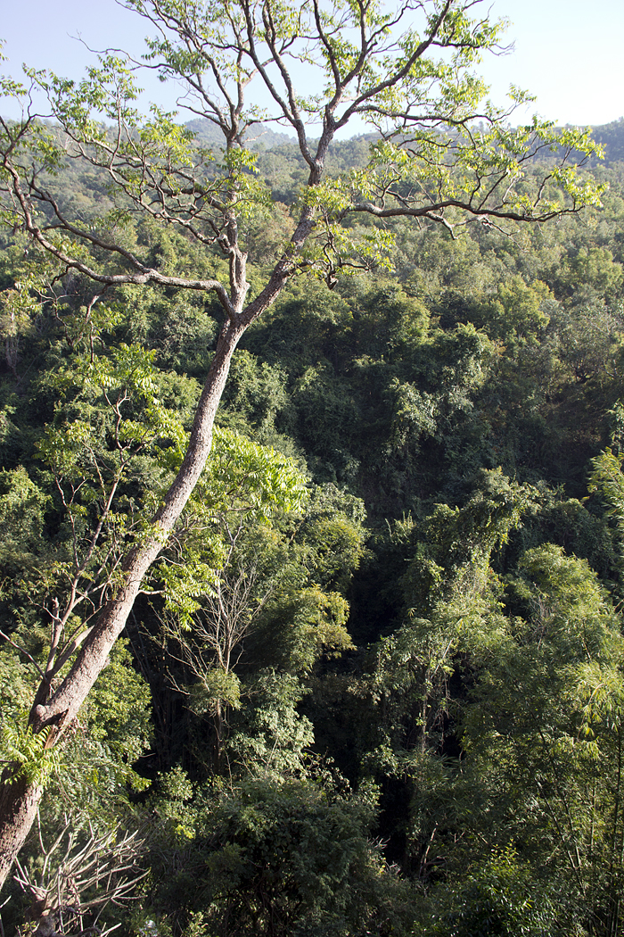 Bergwald bei Maing Thauk