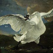 Amsterdam, Rijksmuseum, Jan Asselijn, Der bedrohte Schwan