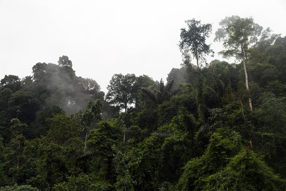 Regenwald, Gunung Leuser National Park, Rainforest, Sumatar, Fabian Fröhlich