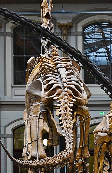 Fabian Fröhlich, Naturkundemuseum Berlin, Lichthof mit Brachiosaurus
