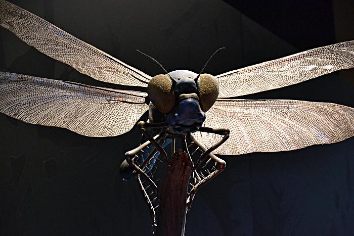 Fabian Fröhlich, Naturkundemuseum Berlin, Modell einer Libelle