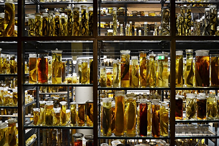 Fabian Fröhlich, Naturkundemuseum Berlin, Nasspräparate
