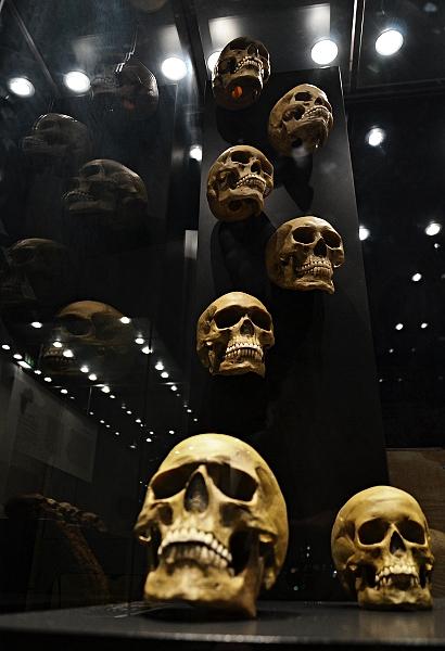 Fabian Fröhlich, Naturkundemuseum Berlin, menschliche Schädel