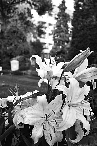 Fabian Fröhlich, Berlin, St.-Michael-Friedhof, Lilien