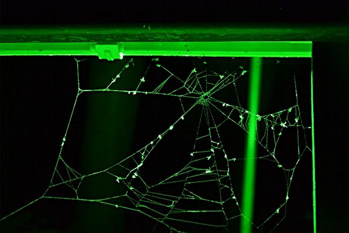 Fabian Fröhlich, Kassel, Insel Siebenbergen, Lichtinseln, Spinnennetz