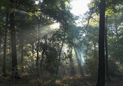 Fabian Fröhlich, Potsdam, Park Sanssouci, Nebel