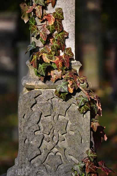 Fabian Fröhlich, Kassel, Hauptfriedhof, Efeu