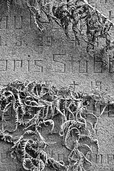 Fabian Fröhlich, Berlin, Friedhöfe am Halleschen Tor, vertrockneter Farn