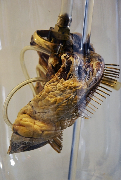Fabian Fröhlich, Kassel, Museum für Sepulkralkultur, Richard Schwarzer, O vivo o morto