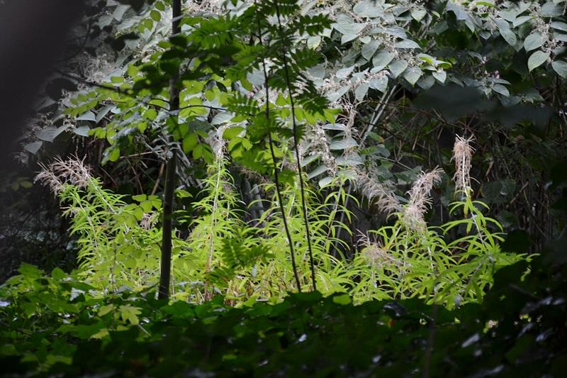 Augsburg, versteckter Garten