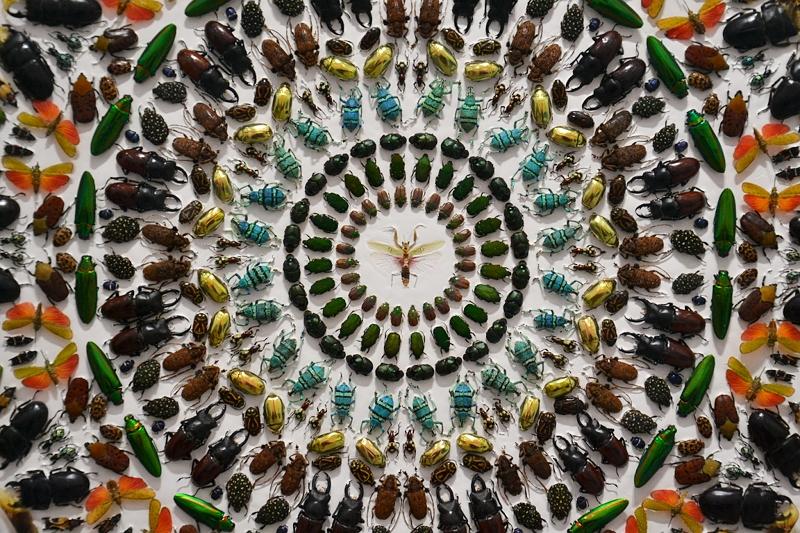 London, Frieze Art Fair, Damien Hirst, Insects, Fabian Fröhlich