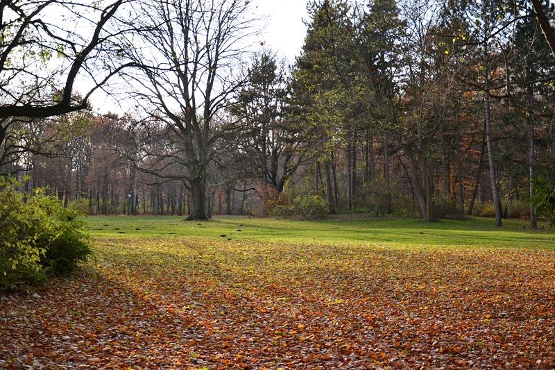 Berlin Tiergarten, Herbst, Fabian Fröhlich,