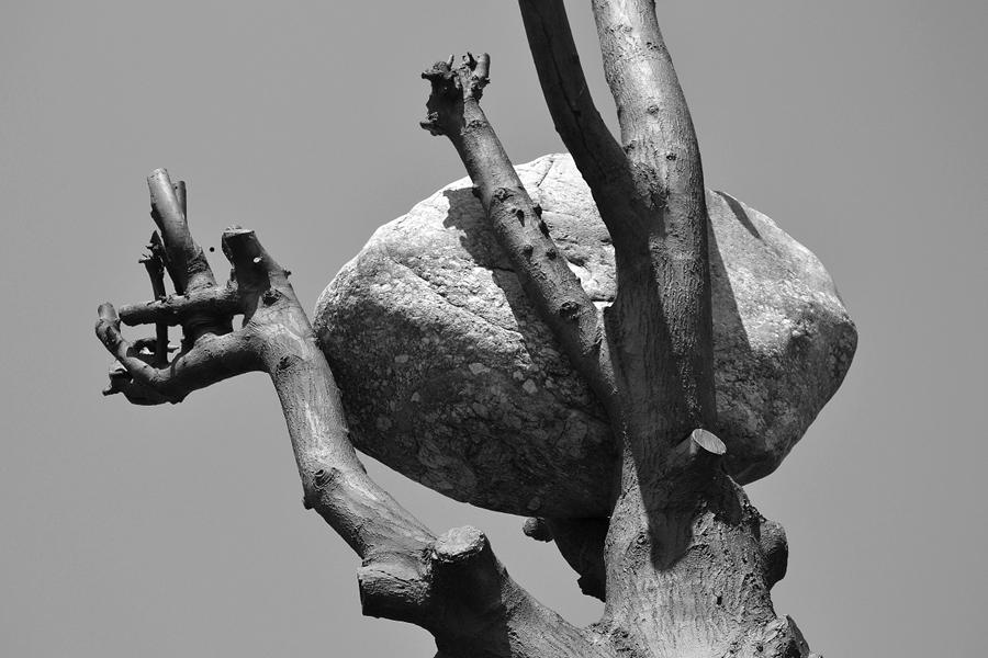 Giuseppe Penone, Idee di pietra, 2003/2008/2012, Staatspark Karlsaue, Kassel