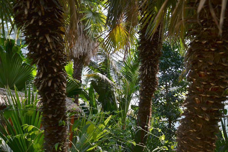 Potsdam, Botanischer Garten, Palmenhaus