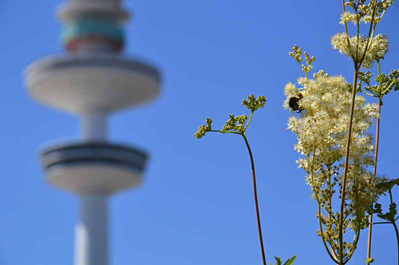 Planten un Blomen, Fernsehturm, Hamburg,