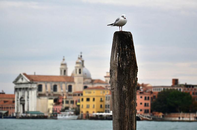 Venice, I Gesuati (Santa Maria del Rosario)