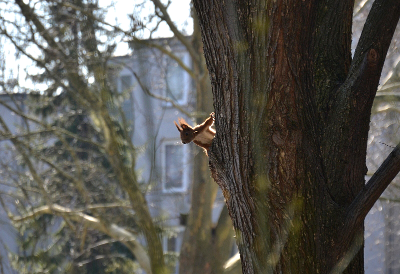 Hansaviertel Berlin, Eichhörnchen