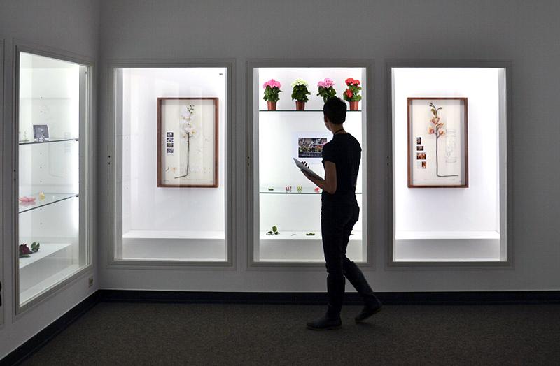 8. Berlin Biennale, Museen Dahlem, Alberto Baraya, Comparative Studies, Herbarium of Artificial Plants