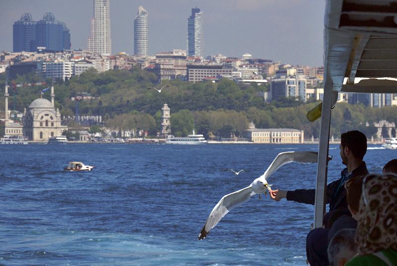Istanbul, Fähre und Möwe mit Blick auf Beşiktaş