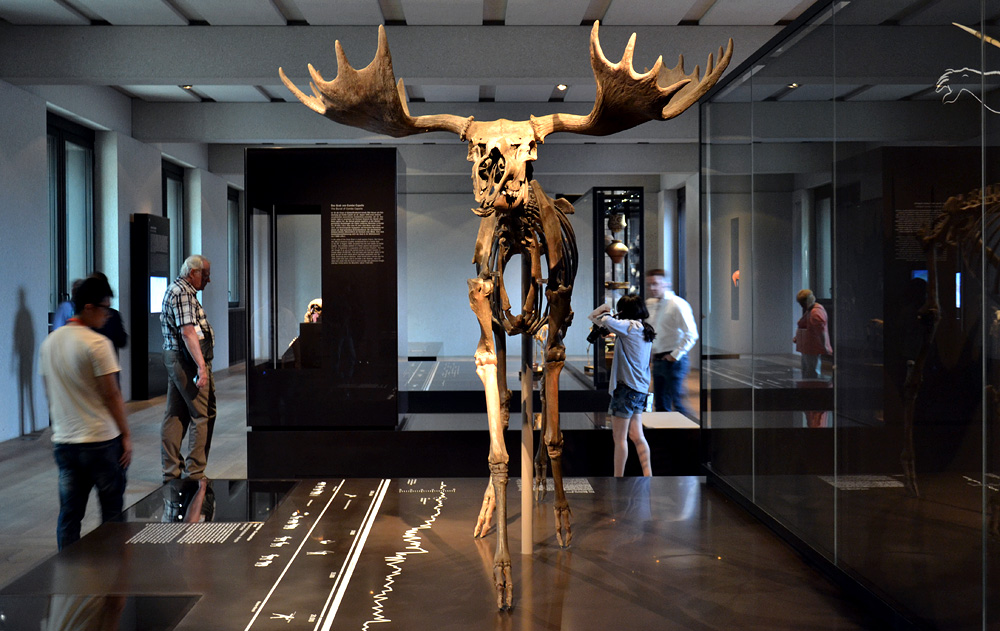 Neues Museum, Museum für Vor- und Frühgeschichte, Elch vom Hansaplatz