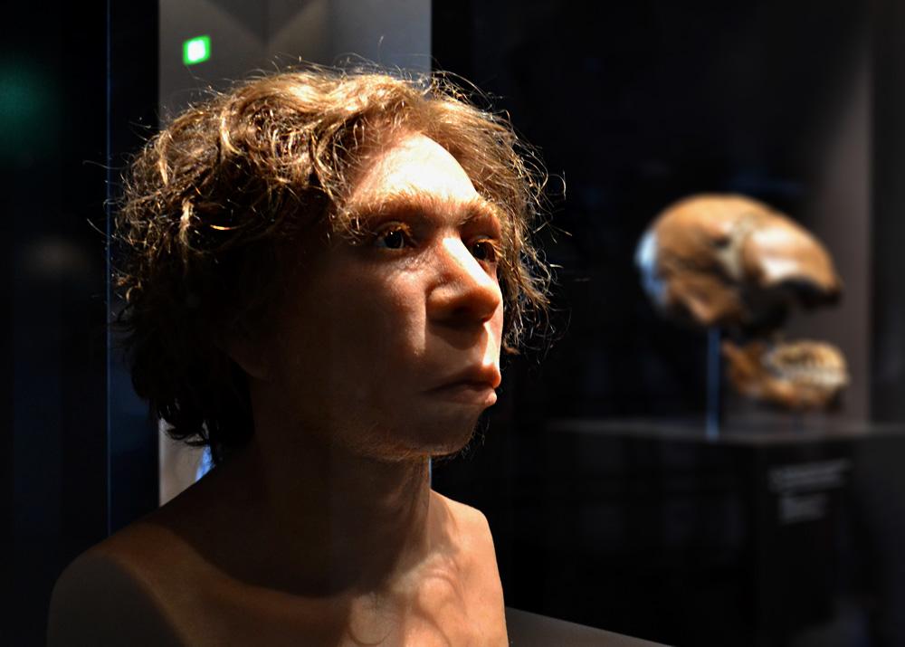 Homo aurignacensis Hauseri, Neues Museum, Museum für Vor- und Frühgeschichte, Rekonstruktion eines Neanderthalers (Schädel von Le Moustier)