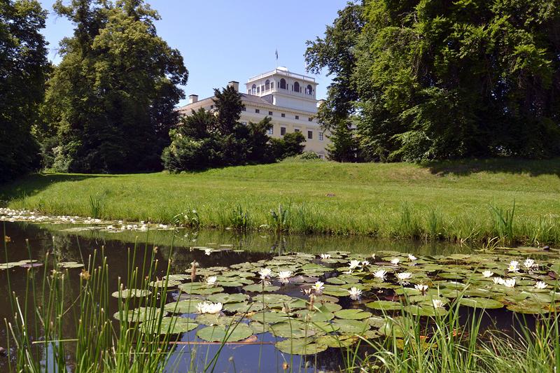 Schwanteich im Park Wörlitz