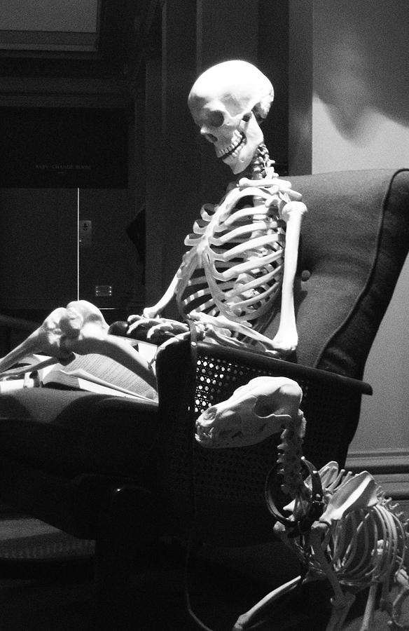 Skelette im Australian Museum Sydney