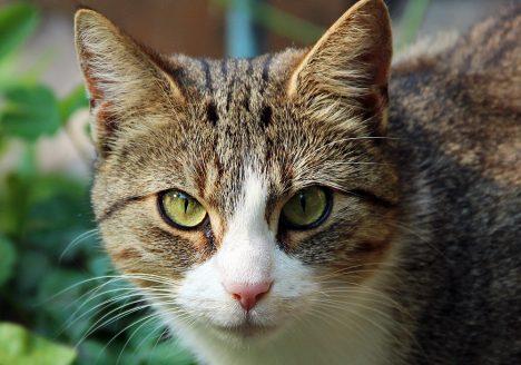 Reichenow, Katze