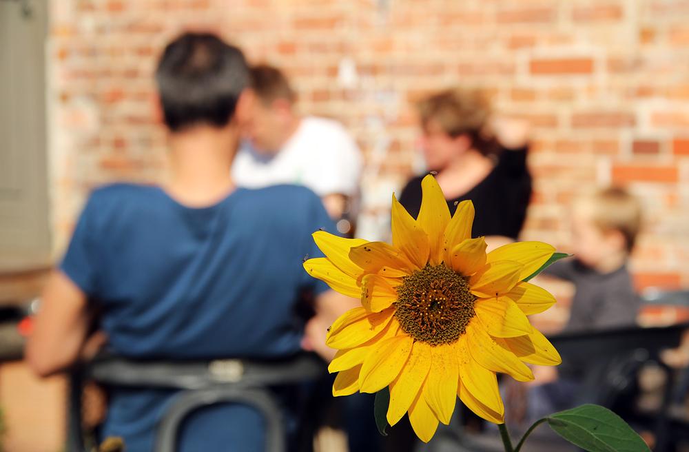 Reichenow, Sonnenblume